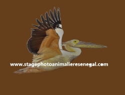 STAGES PHOTO ANIMALIERE